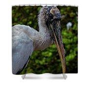Immature Wood Stork Shower Curtain