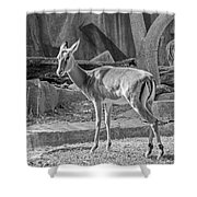 Impala    Black And White Shower Curtain