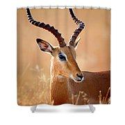 Impala Male Portrait Shower Curtain