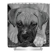 Impawsible Shower Curtain