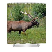 Imperial Bull Elk Shower Curtain