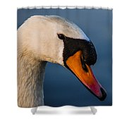 Imperial Swan Shower Curtain