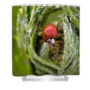 Imposter Ladybug Shower Curtain