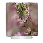 Impression With A Small Butterfly Shower Curtain