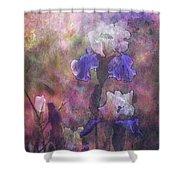 Impressionist Purple And White Irises 6647 Idp_2 Shower Curtain