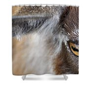 In A Goat's Eye Shower Curtain