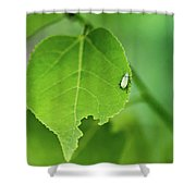 In A  Green World  Shower Curtain