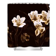 In A Line Shower Curtain by Diane Reed