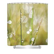 In A Meadow Shower Curtain