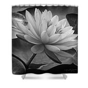 In A Mermaid's Garden - Monochrome Version Shower Curtain