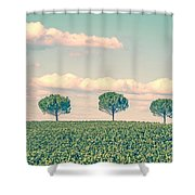 In A Row Shower Curtain