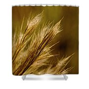 In An Autumn Field - Golden Macro Shower Curtain
