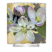 In Apple Blossom Time Shower Curtain