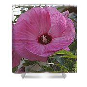 In Bloom - Pink Hibiscus Shower Curtain