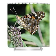 In Disguise Shower Curtain