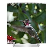 In Flight Meal Shower Curtain