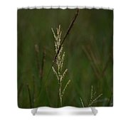 In Green Meadows Shower Curtain