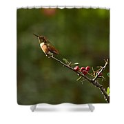 In Line With The Branch Shower Curtain
