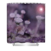 In Mushroom Land  Shower Curtain