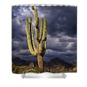 In Search Of That Perfect Saguaro  Shower Curtain