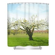 In Spring's Embrace Shower Curtain