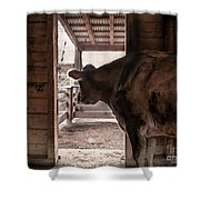 In The Barn Shower Curtain