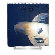 In The Blue World Shower Curtain