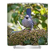 In The Catbird Seat Shower Curtain
