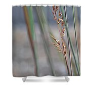 In The Company Of Blue - Shower Curtain