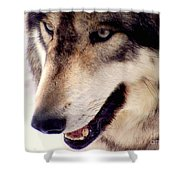 In The Eyes Of The Wolves Shower Curtain