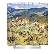In The Foothills - Antelope Shower Curtain