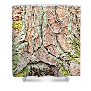 In The Forest Art Series - Tree Bark Patterns 1  Shower Curtain