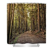 In The Forest Cathedral  Shower Curtain
