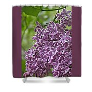 In The Garden. Lilac Shower Curtain