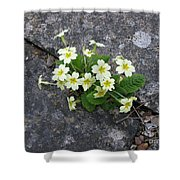 In The Garden Path Shower Curtain