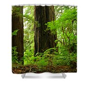 In The Land Of Giants Shower Curtain
