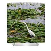 In The Lily Pads Shower Curtain