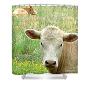 Posing In The Pasture Shower Curtain