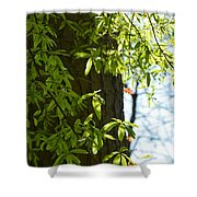 In The Shadows Shower Curtain