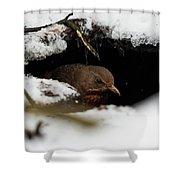 In The Shelder. Eurasian Blackbird Shower Curtain