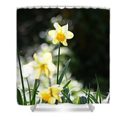 In The Springtime Sunshine Shower Curtain