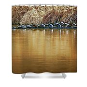 In The Sun - Turtles Shower Curtain