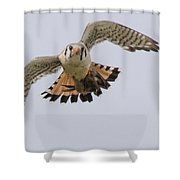 In With Food Shower Curtain