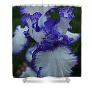 Indelible Passion Shower Curtain