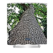 Independence Tree Shower Curtain