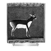 India: Black Buck Shower Curtain
