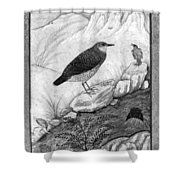 India: Water Ouzels Shower Curtain