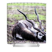 Indian Antelope Shower Curtain