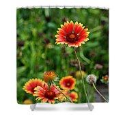 Indian Blanket Flower Shower Curtain