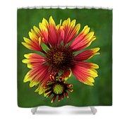 Indian Blanket Flower - Gaillardia Shower Curtain
